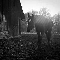 Fotografie koní