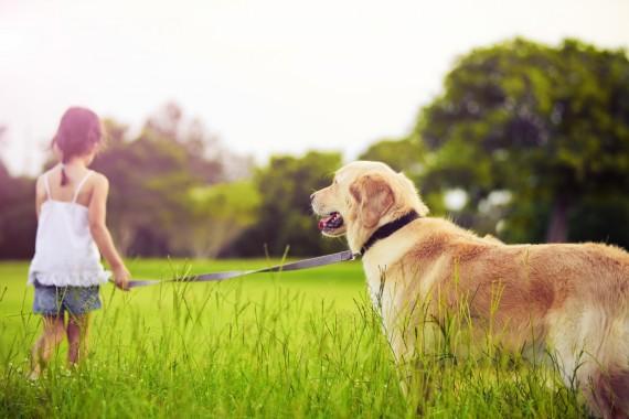 Fotografie psů