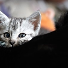 Fotografie koček